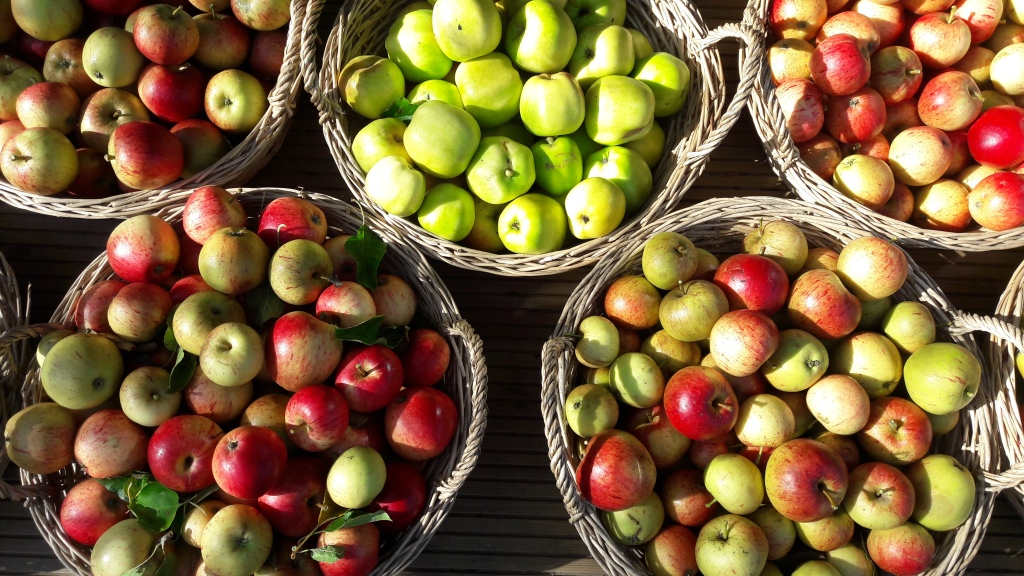 baskets of red and green apples from NEET garden